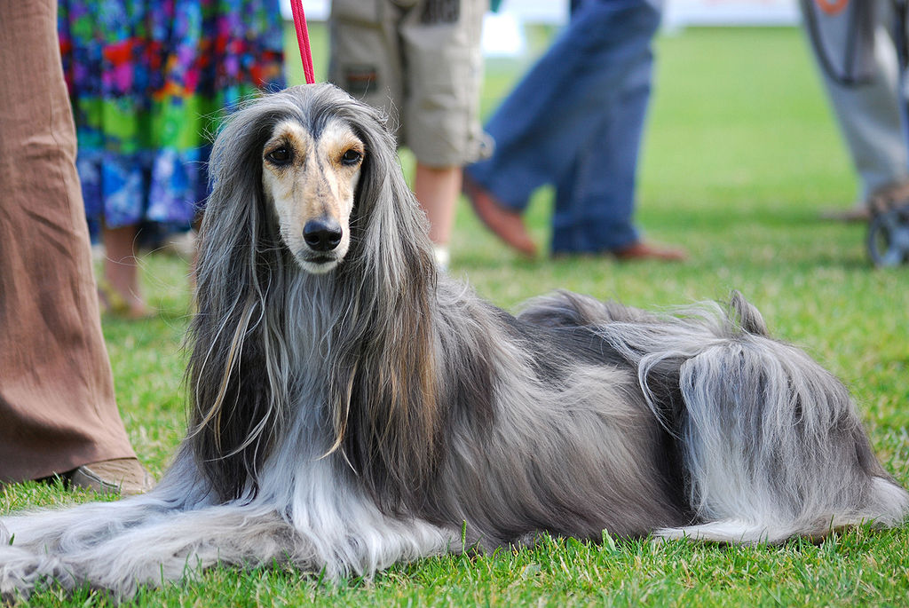 Who Let the Dogs Out? Asian Dog Breeds Appearing at the