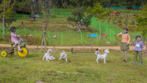 One of Korea's National Treasures Celebrated at Jindo Dog Theme Park 1